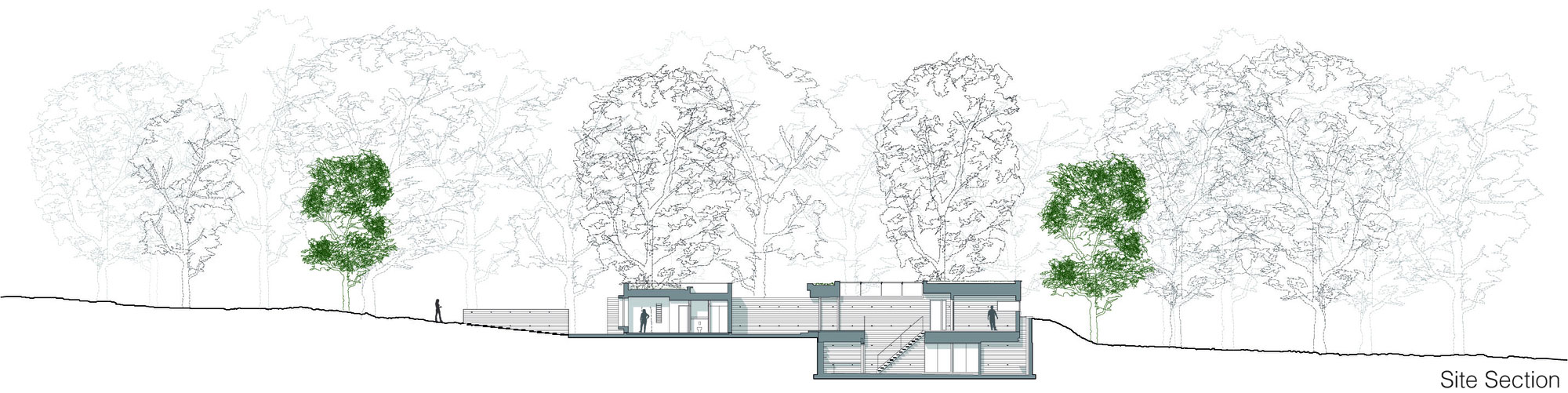 Site Section, Contemporary Home in the New Forest National Park, England